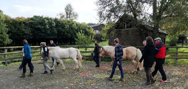 Brandsport Ardennen: Teambuilding op de knuffelpaal, communiceren met paarden, kajakken, het adventure park in met je team!
