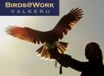 Birds@Work Valkerij Tenuto